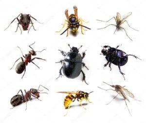 Уничтожение насекомых и грызунов. Дезинсекция Дезинфекция Дератизация СЭС Раменского района