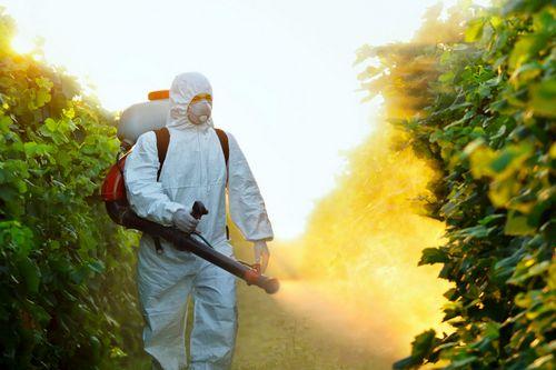 Уничтожение насекомых на растениях