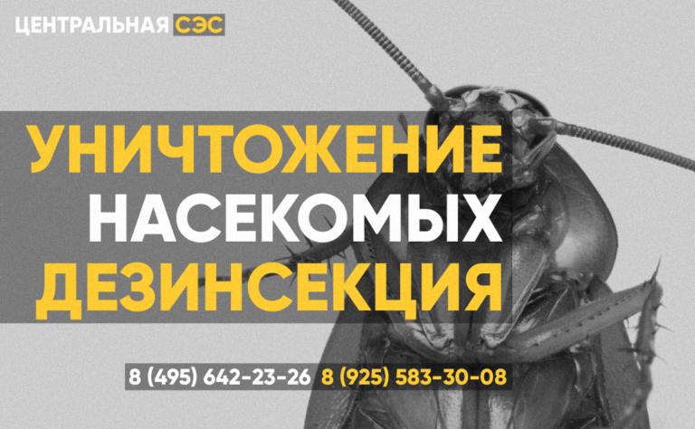 Уничтожение насекомых и грызунов СЭС Чехов